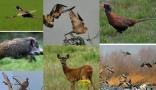 Property Propriété de chasse et d'agrément (YYWE-T28764)